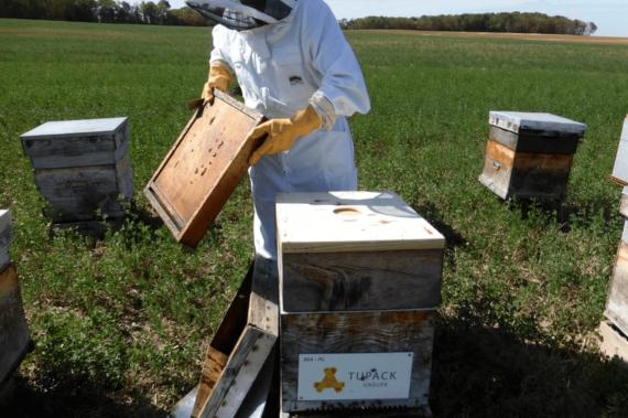 Un toit pour les abeilles